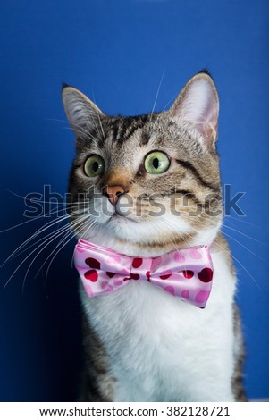 Cat  with a ribbon,bow sitting and looking to camera isolated on violet background.