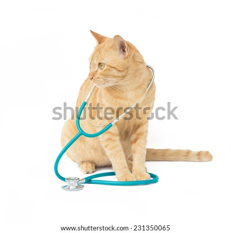 cat with a stethoscope isolated on white background - stock photo