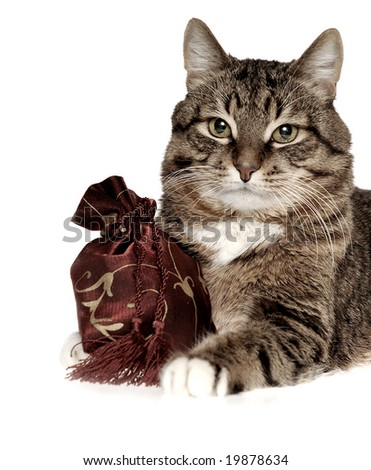 cat with bag
