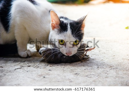 Cat With Bird In Mouth 106