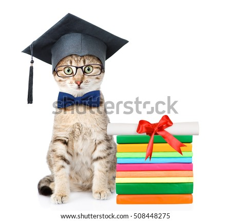 Cat with black graduation hat sitting near books with diploma. isolated on white background