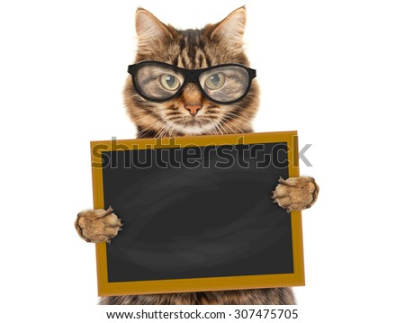 Cat with blackboard and sign  - stock photo