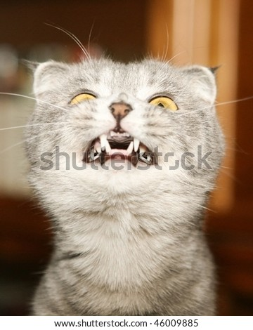 Cat with canines - stock photo