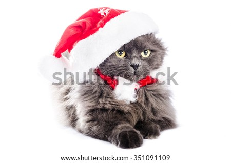 Cat with christmas cap, isolated on white keyboard. color and horisontal composition in studio