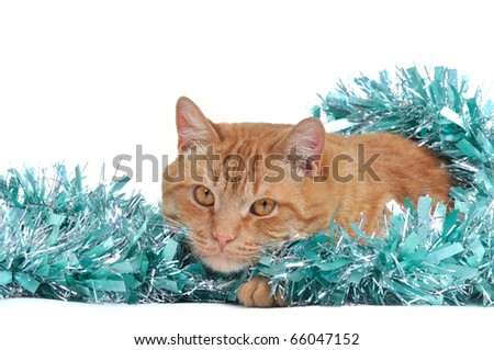 Cat with Christmas Tinsel Decoration - stock photo