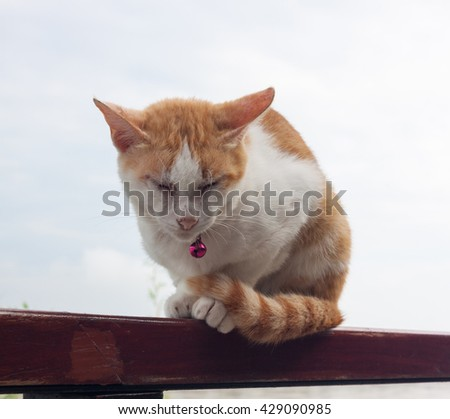 Cat with closed eyes. - stock photo