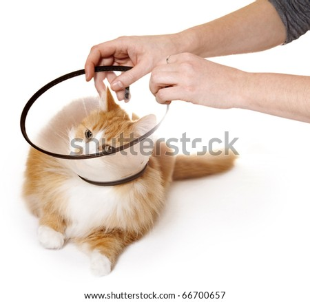 Cat with Cone - stock photo