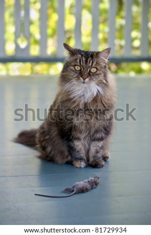 Cat with dead mouse on patio seeking approval for hunting prowess - stock photo