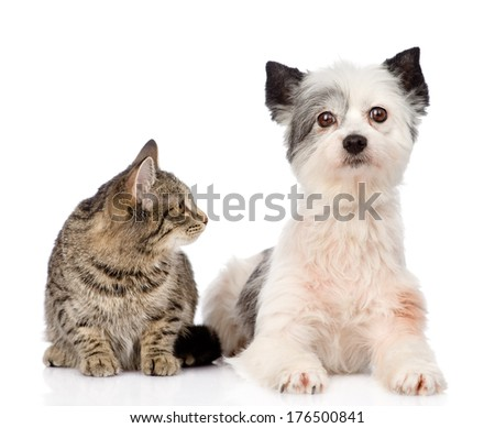 cat with dog together. isolated on white background
