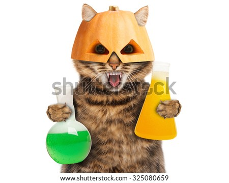 Cat with fangs in halloween mask holding lab tubes with color liquid - stock photo
