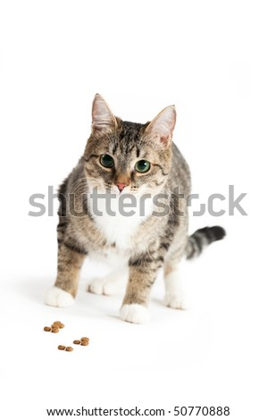 Cat with feed isolated on white - stock photo