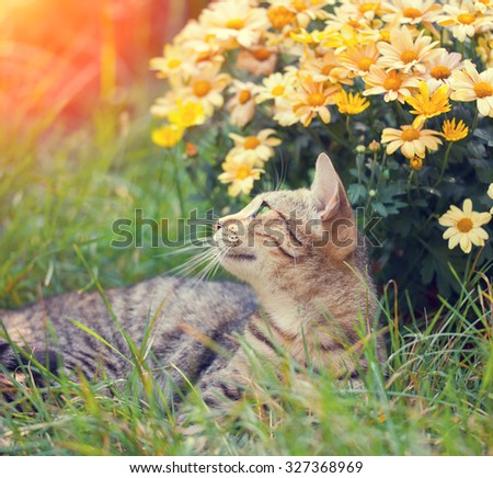 Cat with flowers in the garden