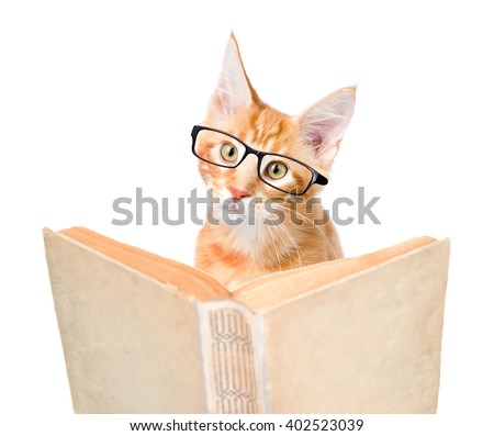 cat with glasses reading a book. isolated on white background