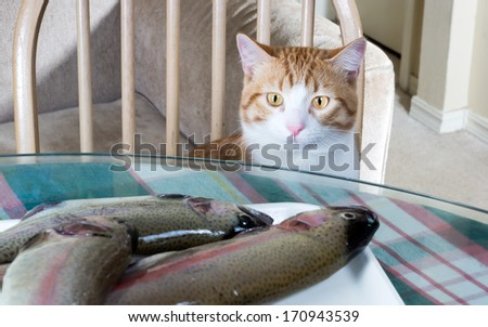 Cat with glowing eyes looking at raw trout - stock photo