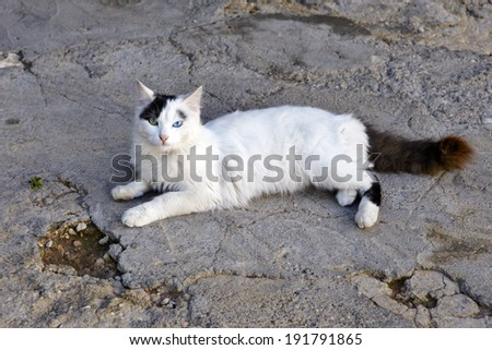 Cat with green and blue eyes - stock photo