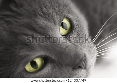 Cat with green-eyed - stock photo