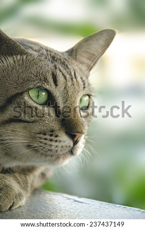 Cat with green eyes  - stock photo