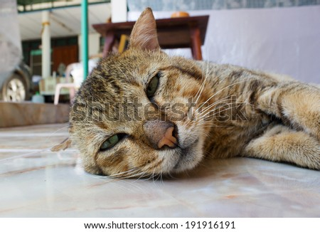 cat with green eyes laying on floor - stock photo