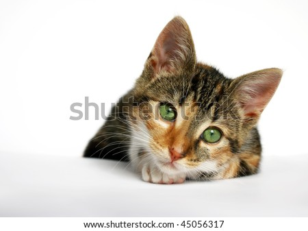 cat with green eyes looking sad into the camera