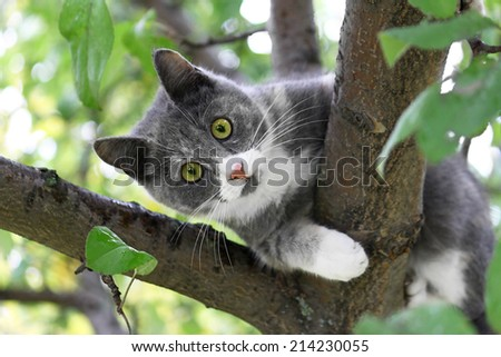Cat with green eyes sitting on a tree trunk - stock photo