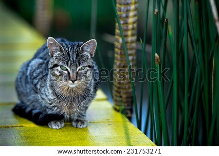 Cat with green eyes waiting by grass - stock photo