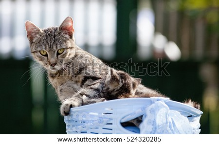 Cat with her Kittens in a Basket Outdoors.