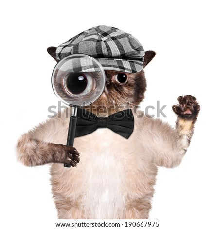 Cat with magnifying glass and searching - stock photo