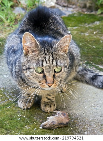 cat with mouse - stock photo