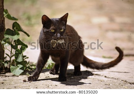 Cat with mouse in mouth after successful hunt - stock photo