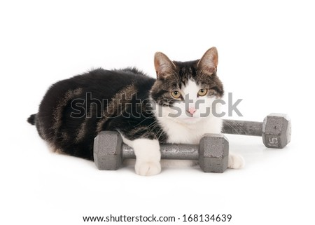 Cat with one paw resting on dumbbell, isolated on white - stock photo