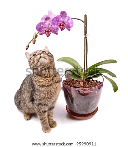 Cat with orchid, close up, isolated white background - stock photo
