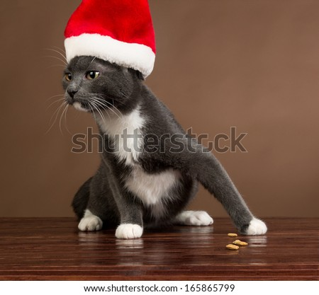 Cat with Santa Claus Hat. - stock photo