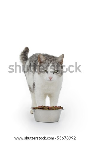 Cat with saucer granule on white background. - stock photo