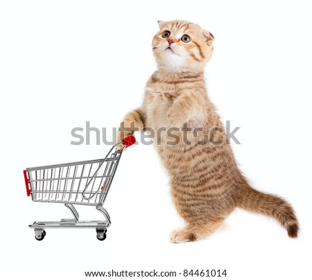 cat with shopping cart isolated on white - stock photo