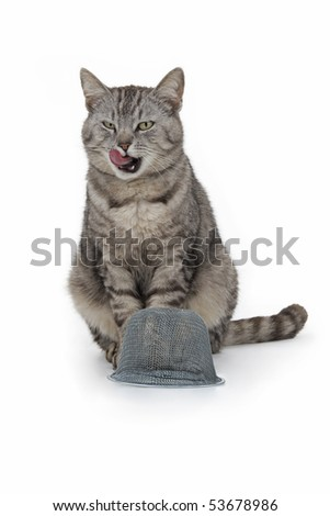 Cat with trap just over food on white background. - stock photo