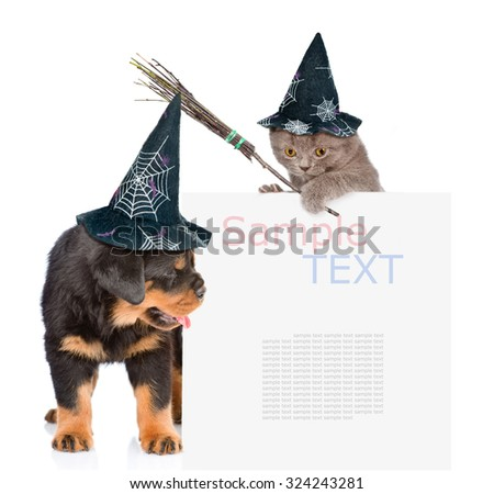 Cat  with witches broom stick and Dog with hats for halloween peeking from behind empty board. isolated on white background - stock photo