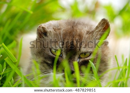 Cat with yellow eyes in the grass