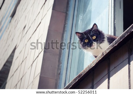 Cat with yellow eyes is seating on the window and looks terrified - stock photo