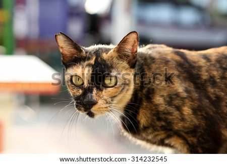 Cat with yellow eyes on the wall looking at camera