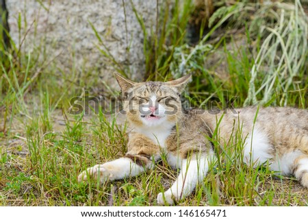 cat yawning on the grass - stock photo