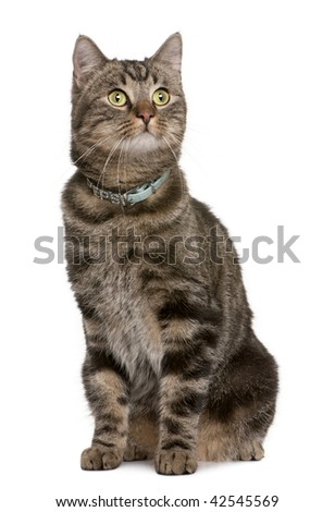Cat, 2 years old, sitting in front of white background, studio shot - stock photo