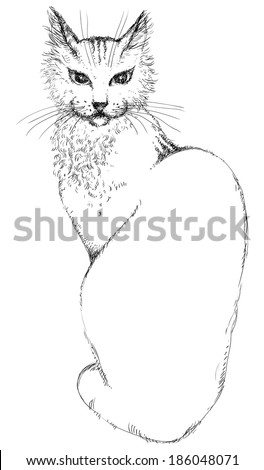 Cat . Young beautiful cat at engraved style  - stock photo