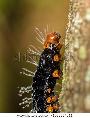 Orange white caterpillar black spikes dress