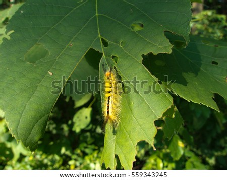 Caterpillar clinging to leaf.