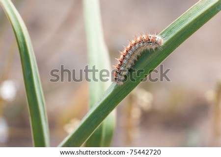 Caterpillar on grass in a wild nature - stock photo