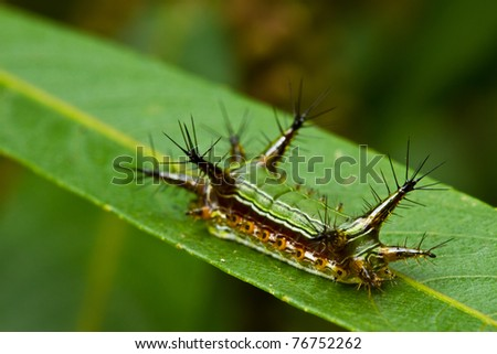 caterpillar on green leaf - stock photo