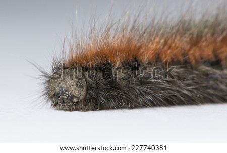 caterpillar portrait