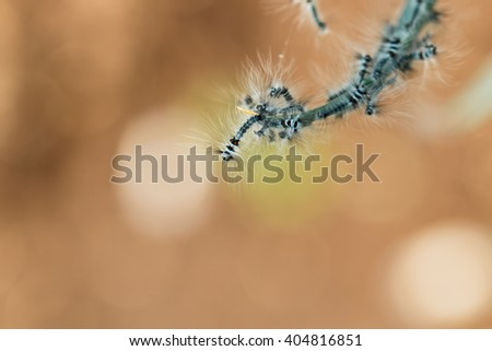 caterpillar,Worms, insects-caterpillars-focus blurred background. - stock photo