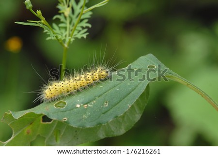 Caterpillars come in many shapes, sizes and colors. - stock photo