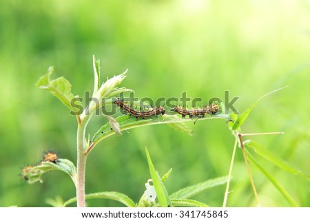 Caterpillars on young trees - stock photo